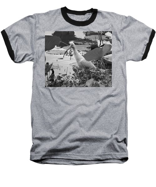 American White Ibis Black And White Baseball T-Shirt by Dan Sproul