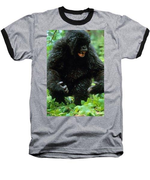 Angry Mountain Gorilla Baseball T-Shirt by Art Wolfe