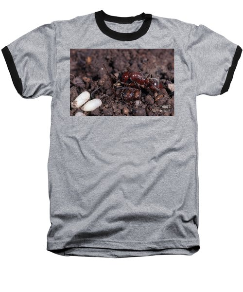 Ant Queen Fight Baseball T-Shirt by Gregory G. Dimijian, M.D.