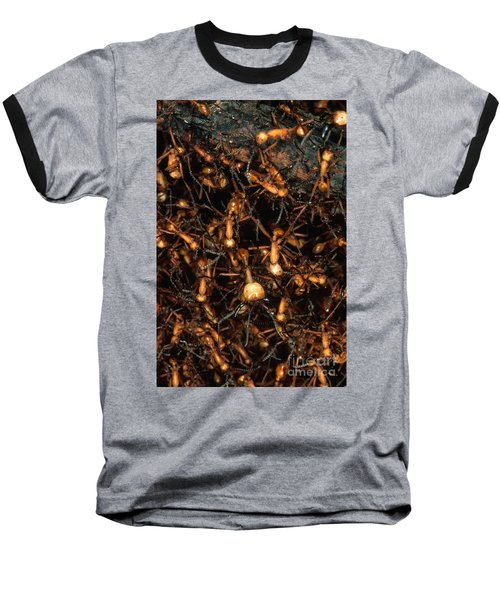 Army Ant Bivouac Site Baseball T-Shirt by Gregory G. Dimijian, M.D.