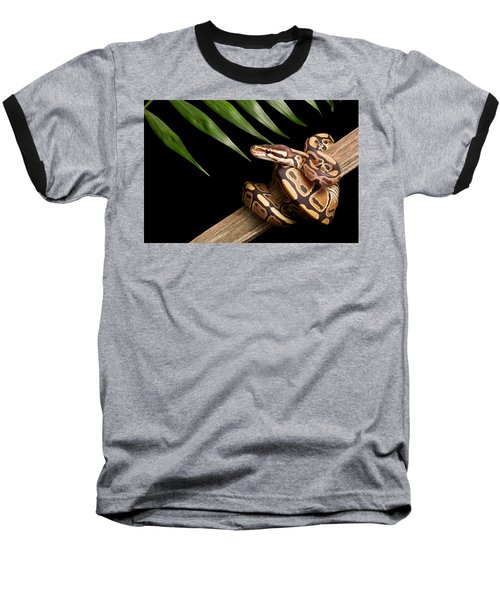 Ball Python Python Regius On Branch Baseball T-Shirt by David Kenny