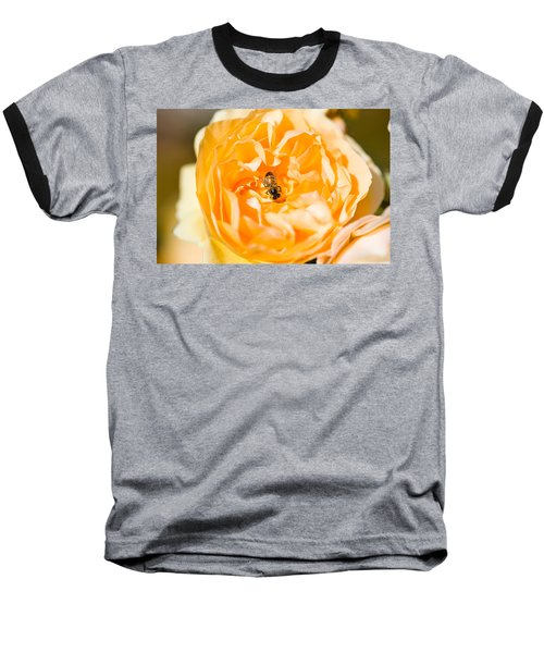 Bee Pollinating A Yellow Rose, Beverly Baseball T-Shirt by Panoramic Images