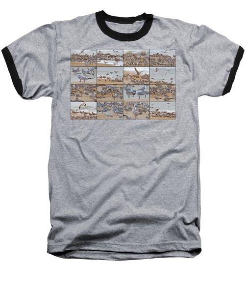 Birds Of Many Feathers Baseball T-Shirt by Betsy Knapp