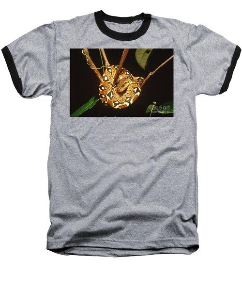 Boa Constrictor Baseball T-Shirt by Art Wolfe