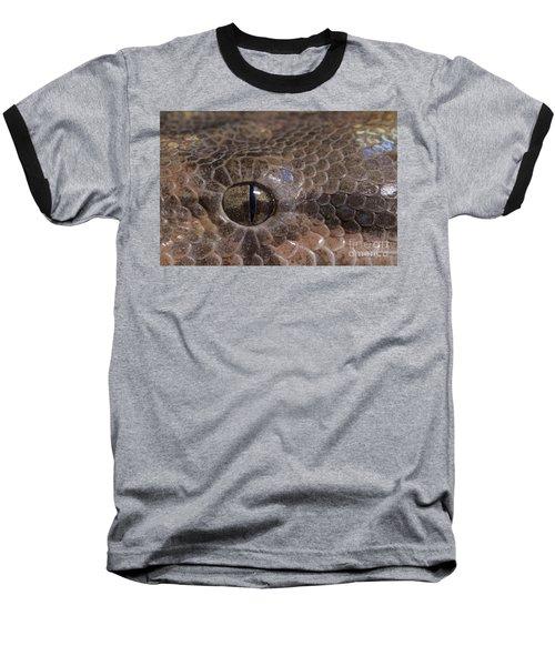 Boa Constrictor Baseball T-Shirt by Chris Mattison FLPA