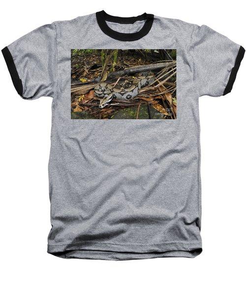 Boa Constrictor Baseball T-Shirt by Francesco Tomasinelli