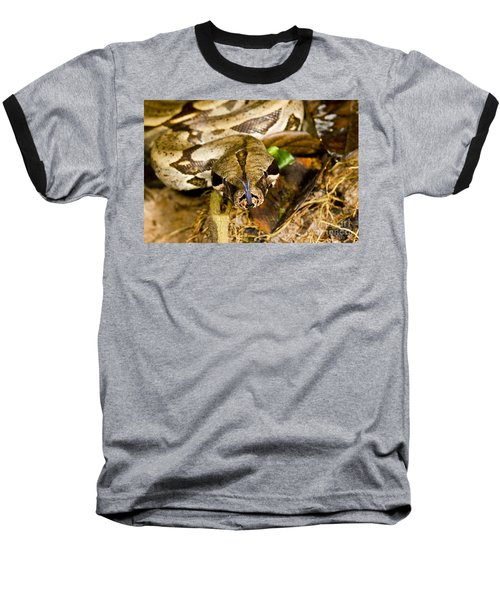 Boa Constrictor Baseball T-Shirt by Gregory G. Dimijian, M.D.