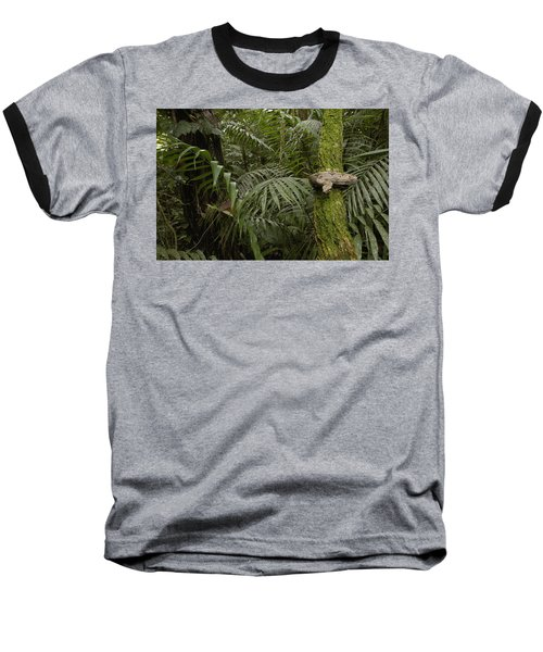 Boa Constrictor In The Rainforest Baseball T-Shirt by Pete Oxford