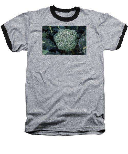 Broccoli Baseball T-Shirt by Robert Bales