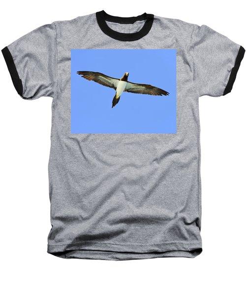 Brown Booby Baseball T-Shirt by Tony Beck