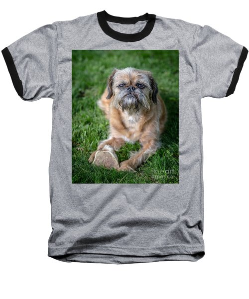 Brussels Griffon Baseball T-Shirt by Edward Fielding