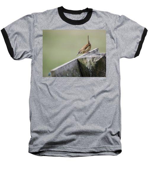Carolina Wren Two Baseball T-Shirt by Heather Applegate