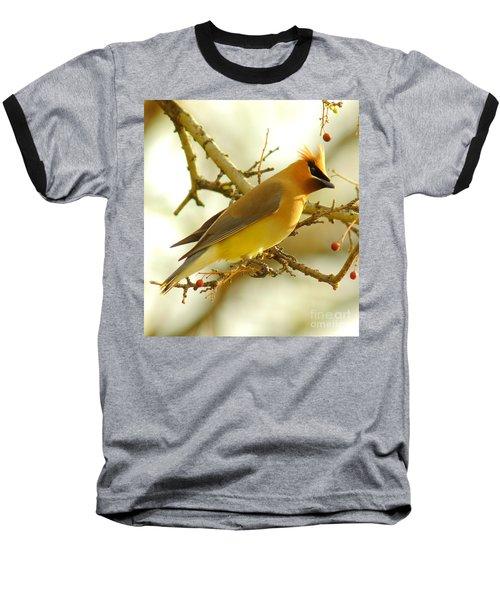 Cedar Waxwing Baseball T-Shirt by Robert Frederick