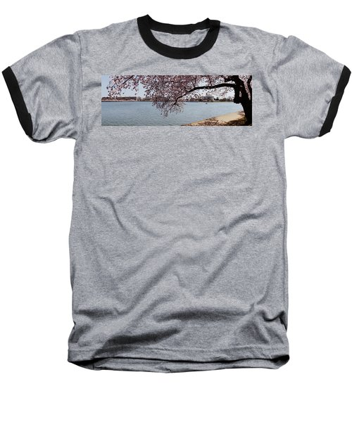 Cherry Blossom Trees With The Jefferson Baseball T-Shirt by Panoramic Images
