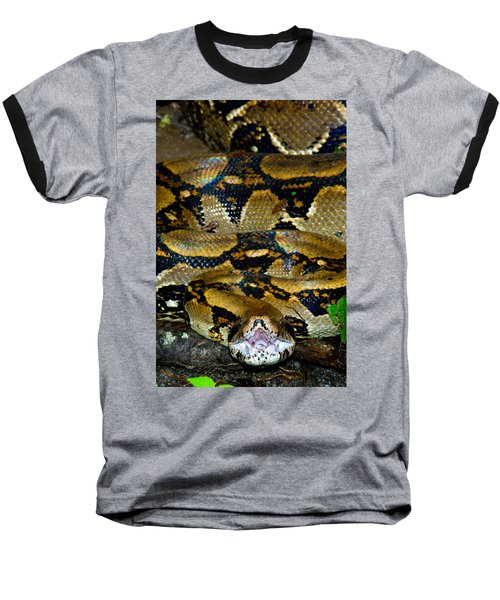 Close-up Of A Boa Constrictor, Arenal Baseball T-Shirt by Panoramic Images