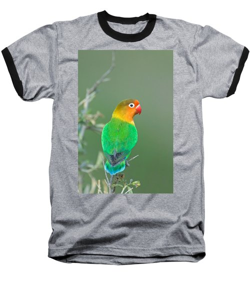Close-up Of A Fischers Lovebird Baseball T-Shirt by Panoramic Images
