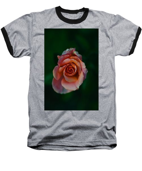 Close-up Of A Pink Rose, Beverly Hills Baseball T-Shirt by Panoramic Images