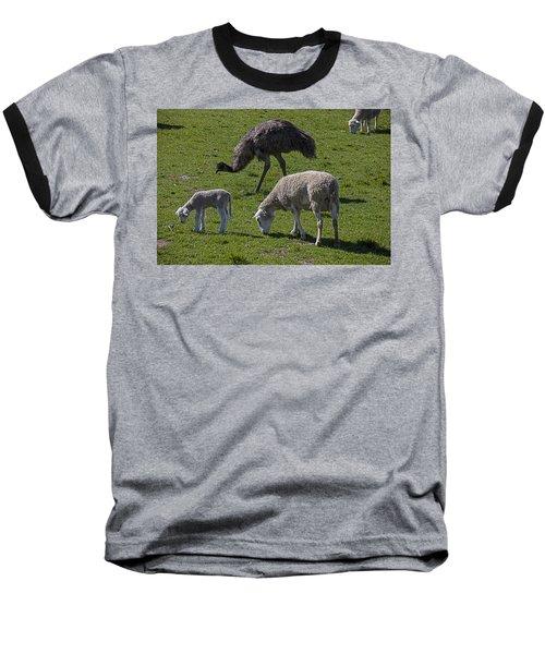 Emu And Sheep Baseball T-Shirt by Garry Gay