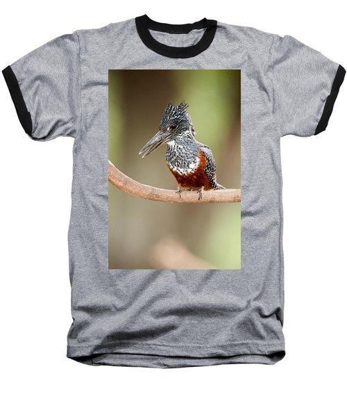 Giant Kingfisher Megaceryle Maxima Baseball T-Shirt by Panoramic Images