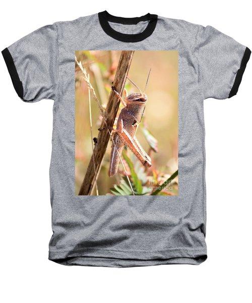 Grasshopper In The Marsh Baseball T-Shirt by Carol Groenen