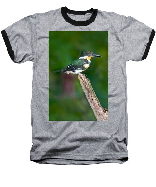 Green Kingfisher Chloroceryle Baseball T-Shirt by Panoramic Images