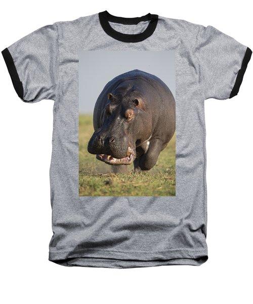 Hippopotamus Bull Charging Botswana Baseball T-Shirt by Vincent Grafhorst
