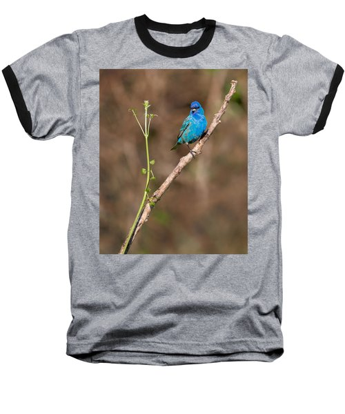 Indigo Bunting Portrait Baseball T-Shirt by Bill Wakeley
