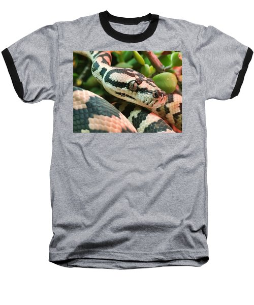 Jungle Python Baseball T-Shirt by Kelly Jade King