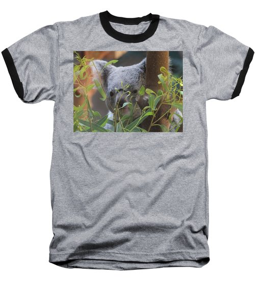 Koala Bear  Baseball T-Shirt by Dan Sproul