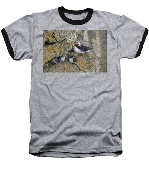 Least Auklets Perched On A Narrow Ledge Baseball T-Shirt by Milo Burcham