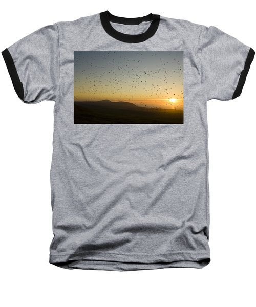 Least Auklets, Returning To Their Nest Baseball T-Shirt by Brian Guzzetti
