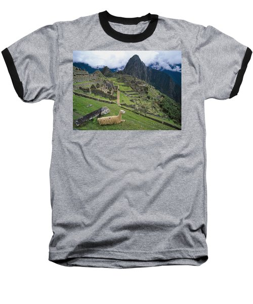 Llama At Machu Picchus Ancient Ruins Baseball T-Shirt by Chris Caldicott