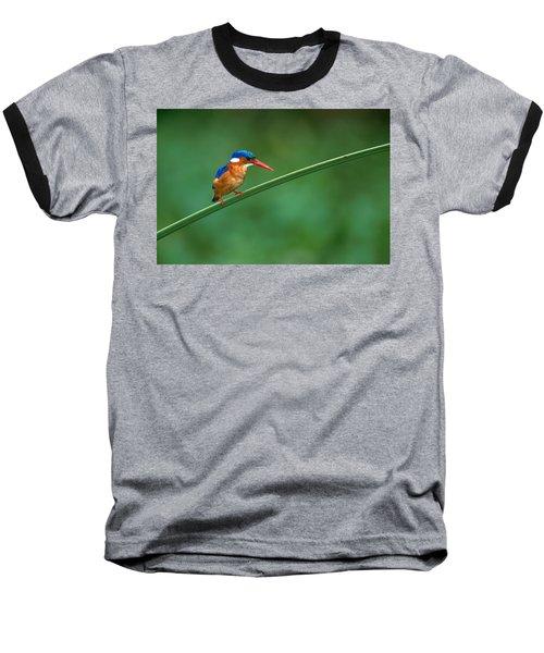 Malachite Kingfisher Tanzania Africa Baseball T-Shirt by Panoramic Images