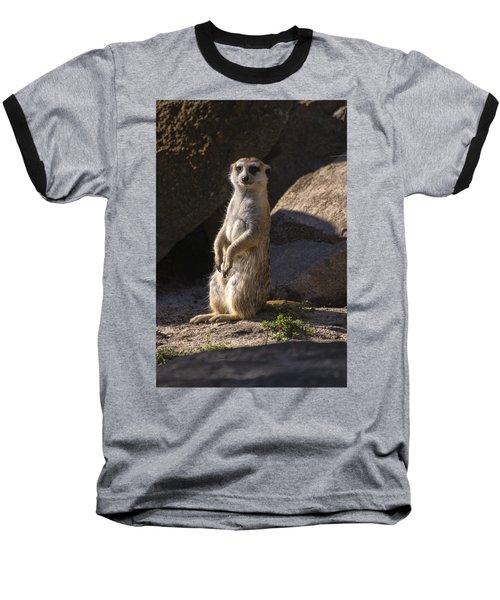 Meerkat Looking Forward Baseball T-Shirt by Chris Flees