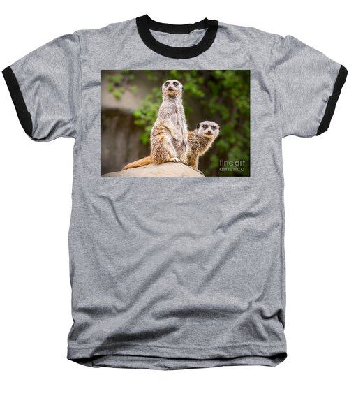 Meerkat Pair Baseball T-Shirt by Jamie Pham