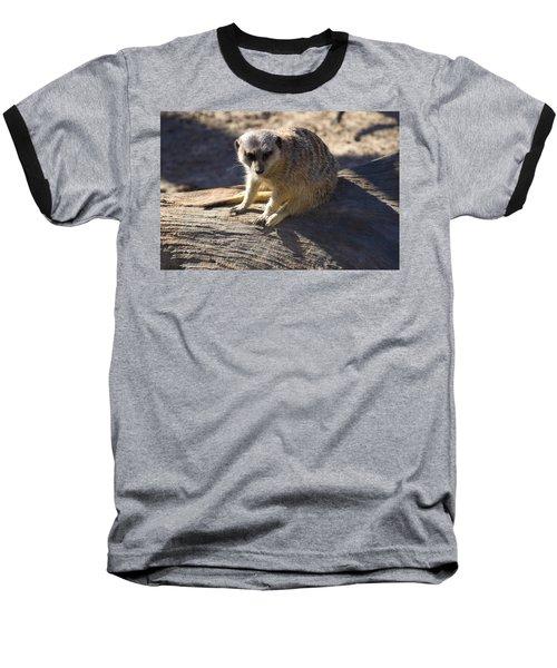 Meerkat Resting On A Rock Baseball T-Shirt by Chris Flees