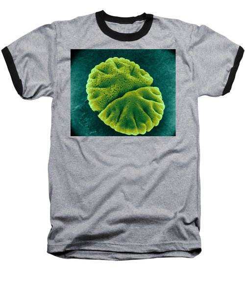 Baseball T-Shirt featuring the photograph Micrasterias Angulosa, Algae, Sem by Science Source