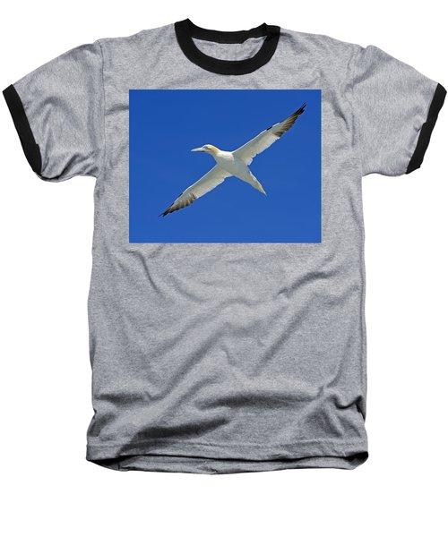 Northern Gannet Baseball T-Shirt by Tony Beck