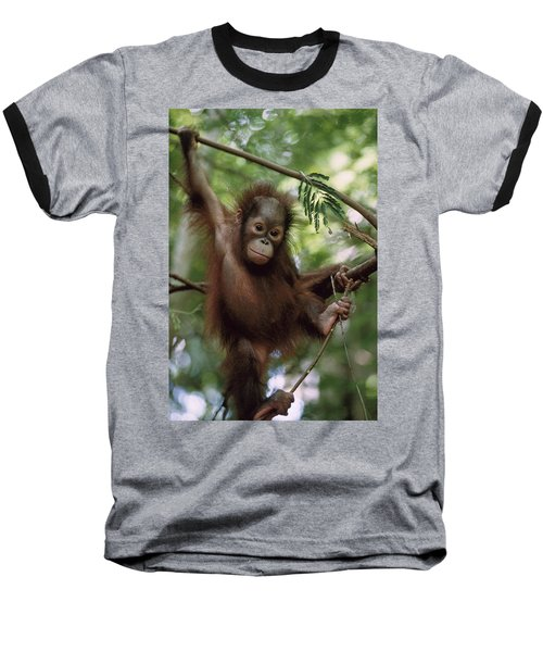 Orangutan Infant Hanging Borneo Baseball T-Shirt by Konrad Wothe