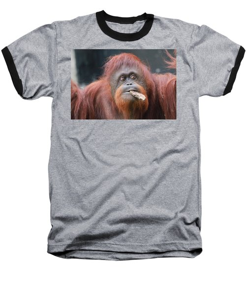 Orangutan Portrait Baseball T-Shirt by Dan Sproul