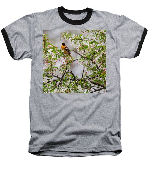 Oriole In Crabapple Tree Square Baseball T-Shirt by Bill Wakeley