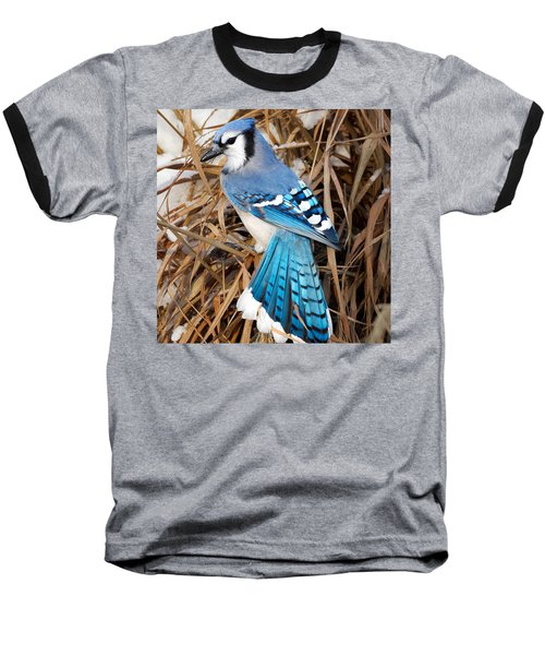Portrait Of A Blue Jay Square Baseball T-Shirt by Bill Wakeley
