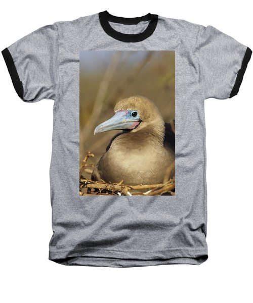 Red-footed Booby Incubating Eggs Baseball T-Shirt by Tui De Roy