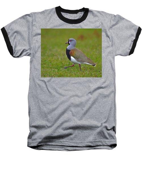 Strutting Lapwing Baseball T-Shirt by Tony Beck