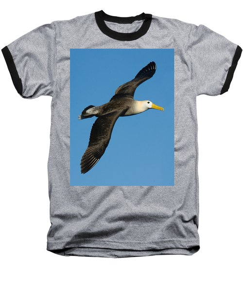 Waved Albatross Diomedea Irrorata Baseball T-Shirt by Panoramic Images