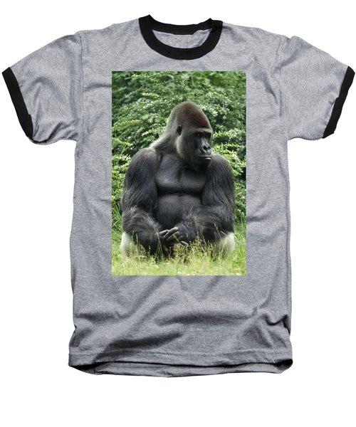 Western Lowland Gorilla Male Baseball T-Shirt by Konrad Wothe