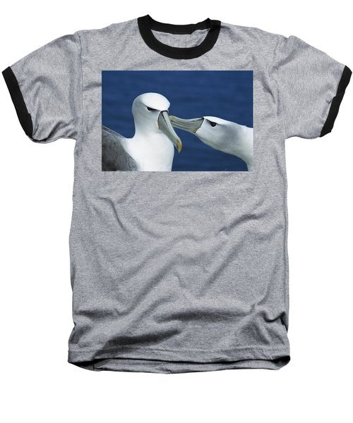 White-capped Albatrosses Courting Baseball T-Shirt by Tui De Roy
