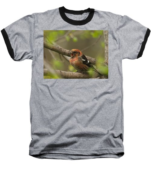 White-winged Crossbill Baseball T-Shirt by James Peterson
