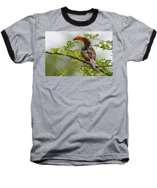 Yellow-billed Hornbill Baseball T-Shirt by Bruce J Robinson