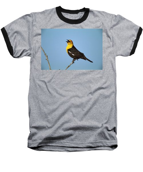 Yellow-headed Blackbird Singing Baseball T-Shirt by Tom Vezo